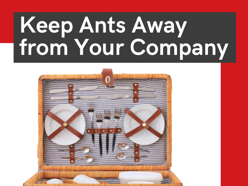 keep ants away from your company